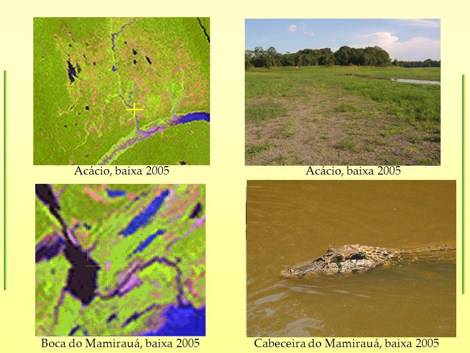Acácio, baixa 2005 Boca do Mamirauá, baixa 2005Cabeceira do Mamirauá, baixa 2005 Acácio, baixa 2005