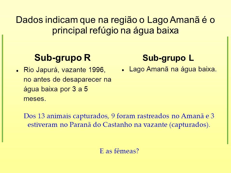 Dados indicam que na região o Lago Amanã é o principal refúgio na água baixa Sub-grupo R Rio Japurá, vazante 1996, no antes de desaparecer na água bai