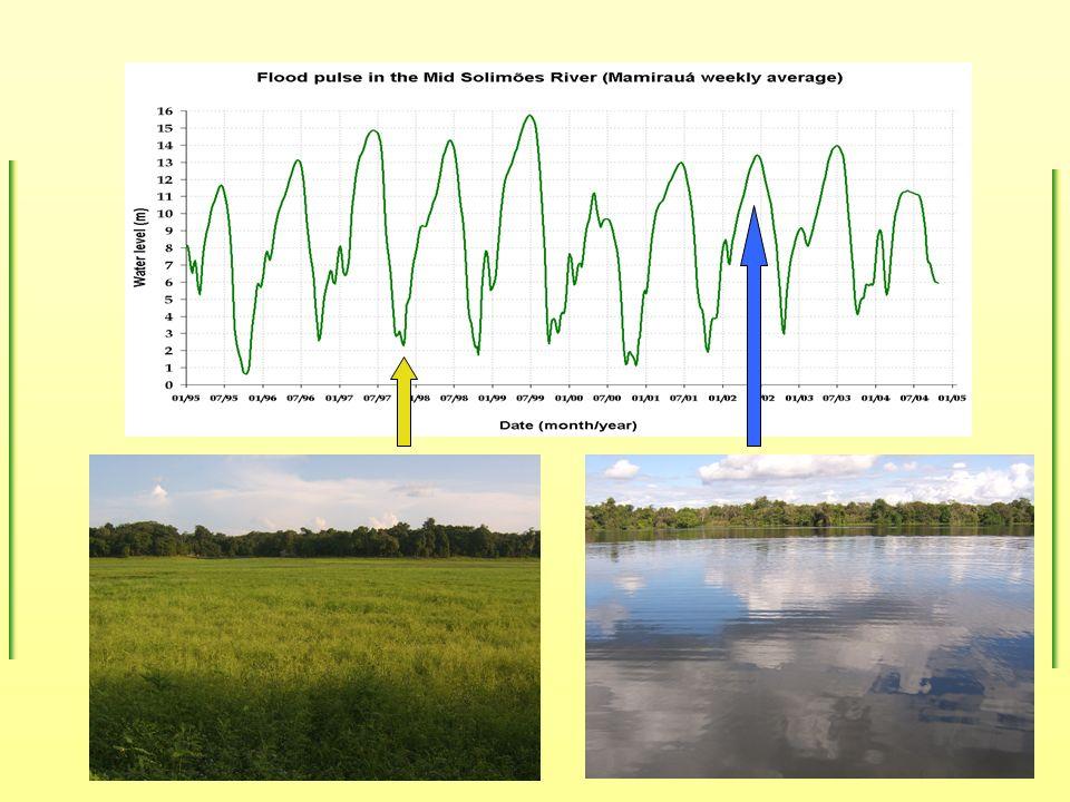 Hipóteses H 1 : Peixes-boi permanecem nos lagos da planície na água alta em associação com as macrófitas aquáticas que lhes propiciam alimento e proteção.