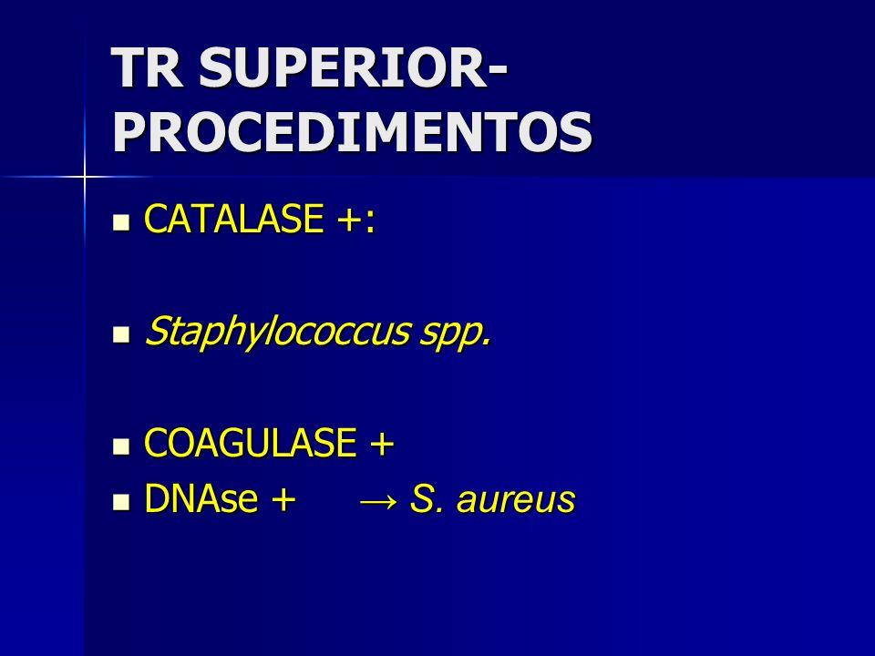 TR SUPERIOR- PROCEDIMENTOS CATALASE +: CATALASE +: Staphylococcus spp. Staphylococcus spp. COAGULASE + COAGULASE + DNAse + S. aureus DNAse + S. aureus