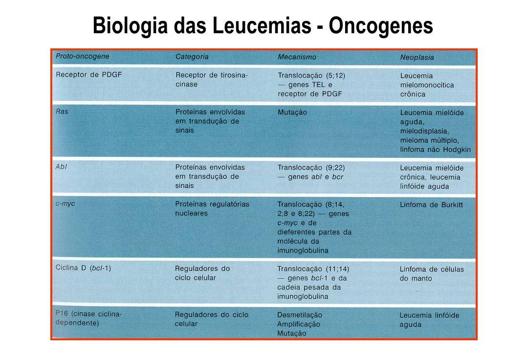 Hemograma Desvio a esquerda Hiato leucêmico Leucometria Bastonete de Auer Praquetopenia Eritroblastos L e u c e m i a