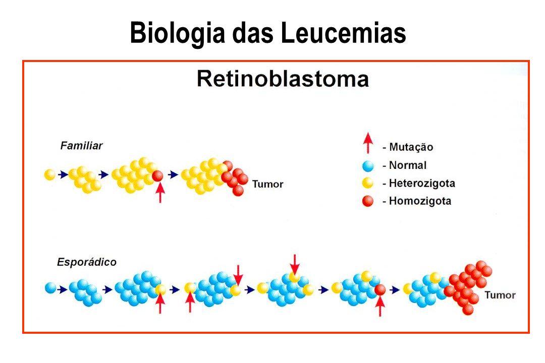 Leucemias Agudas Fatores prognósticos Citologia Resposta ao tratamento Idade Sexo L.A.