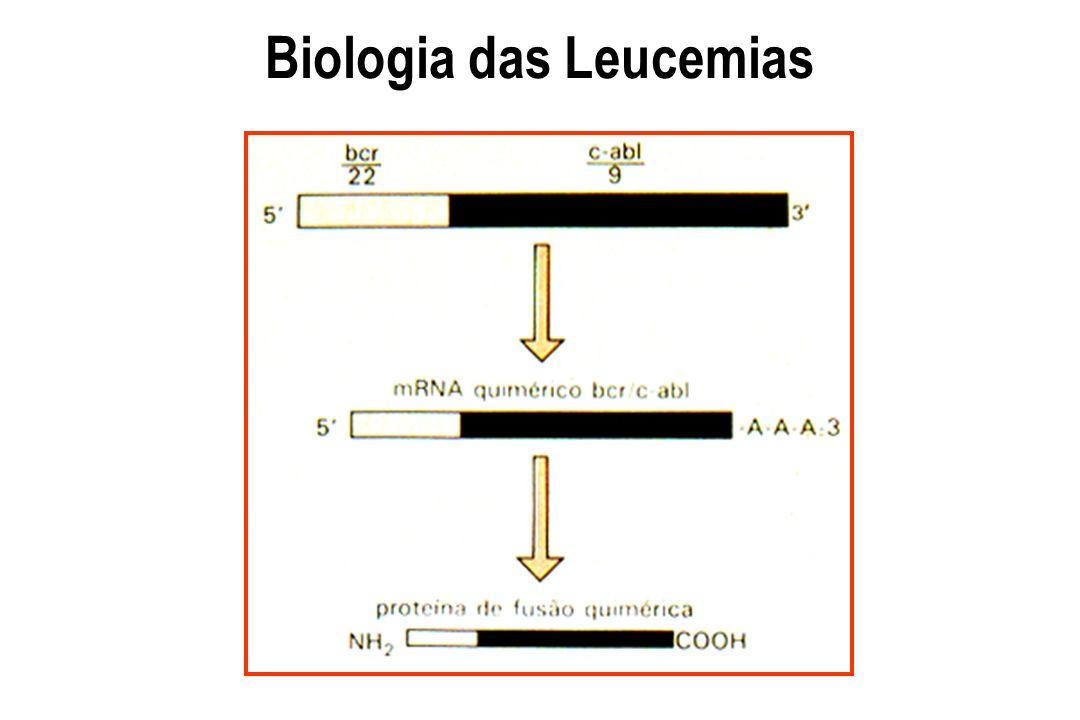 Remissão hematológica Hemograma, mielograma, biópsia óssea : 80% dos pacientes com leucemia aguda após quimioterapia de indução (10 a 10 10 ) Carga tumoral Quantidade de células malignas presentes em um determinado momento da doença (10 11 - 1 grama, 10 12 - 1 Kg) Vigilância imunológica e doença residual mínima Importância clínica na detecção de doenças por técnica sensível sem qualquer quadro clínico Quimioterapia x erradicação das células tumorais Imunodeficiência x tumor L e u c e m i a