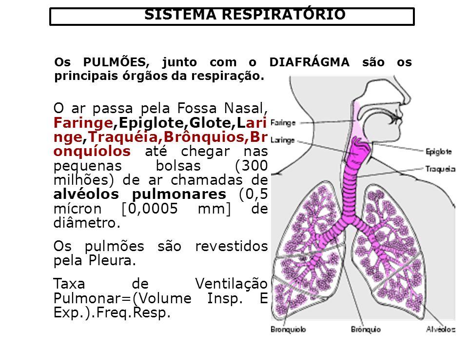 SISTEMA RESPIRATÓRIO Os PULMÕES, junto com o DIAFRÁGMA são os principais órgãos da respiração. O ar passa pela Fossa Nasal, Faringe,Epiglote,Glote,Lar