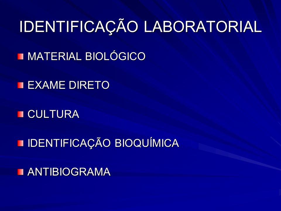 IDENTIFICAÇÃO LABORATORIAL MATERIAL BIOLÓGICO EXAME DIRETO CULTURA IDENTIFICAÇÃO BIOQUÍMICA ANTIBIOGRAMA