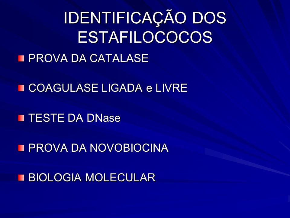IDENTIFICAÇÃO DOS ESTAFILOCOCOS PROVA DA CATALASE COAGULASE LIGADA e LIVRE TESTE DA DNase PROVA DA NOVOBIOCINA BIOLOGIA MOLECULAR