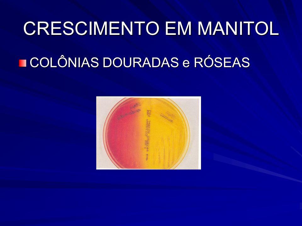 CRESCIMENTO EM MANITOL COLÔNIAS DOURADAS e RÓSEAS
