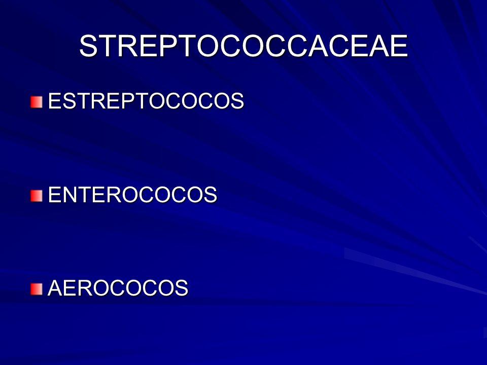 STREPTOCOCCACEAE ESTREPTOCOCOSENTEROCOCOSAEROCOCOS
