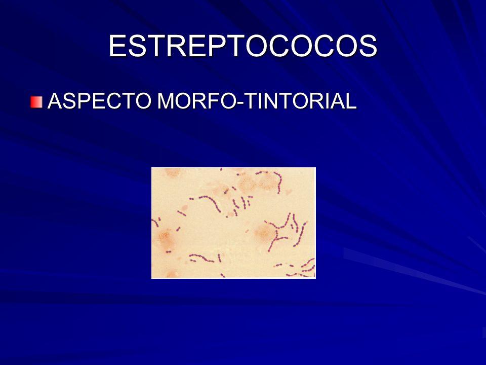 ESTREPTOCOCOS ASPECTO MORFO-TINTORIAL