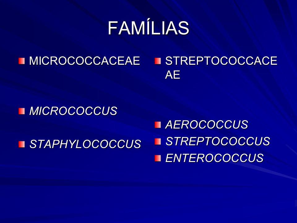 FAMÍLIAS MICROCOCCACEAEMICROCOCCUSSTAPHYLOCOCCUS STREPTOCOCCACE AE AEROCOCCUSSTREPTOCOCCUSENTEROCOCCUS