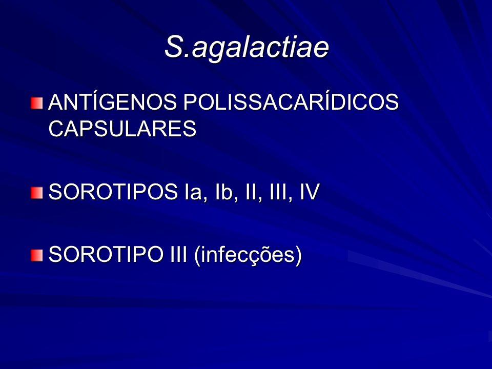 S.agalactiae ANTÍGENOS POLISSACARÍDICOS CAPSULARES SOROTIPOS Ia, Ib, II, III, IV SOROTIPO III (infecções)
