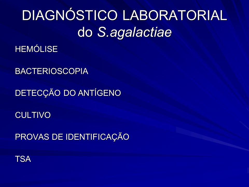 DIAGNÓSTICO LABORATORIAL do S.agalactiae HEMÓLISEBACTERIOSCOPIA DETECÇÃO DO ANTÍGENO CULTIVO PROVAS DE IDENTIFICAÇÃO TSA