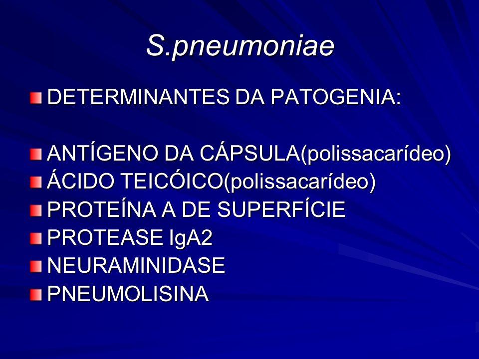S.pneumoniae DETERMINANTES DA PATOGENIA: ANTÍGENO DA CÁPSULA(polissacarídeo) ÁCIDO TEICÓICO(polissacarídeo) PROTEÍNA A DE SUPERFÍCIE PROTEASE IgA2 NEU
