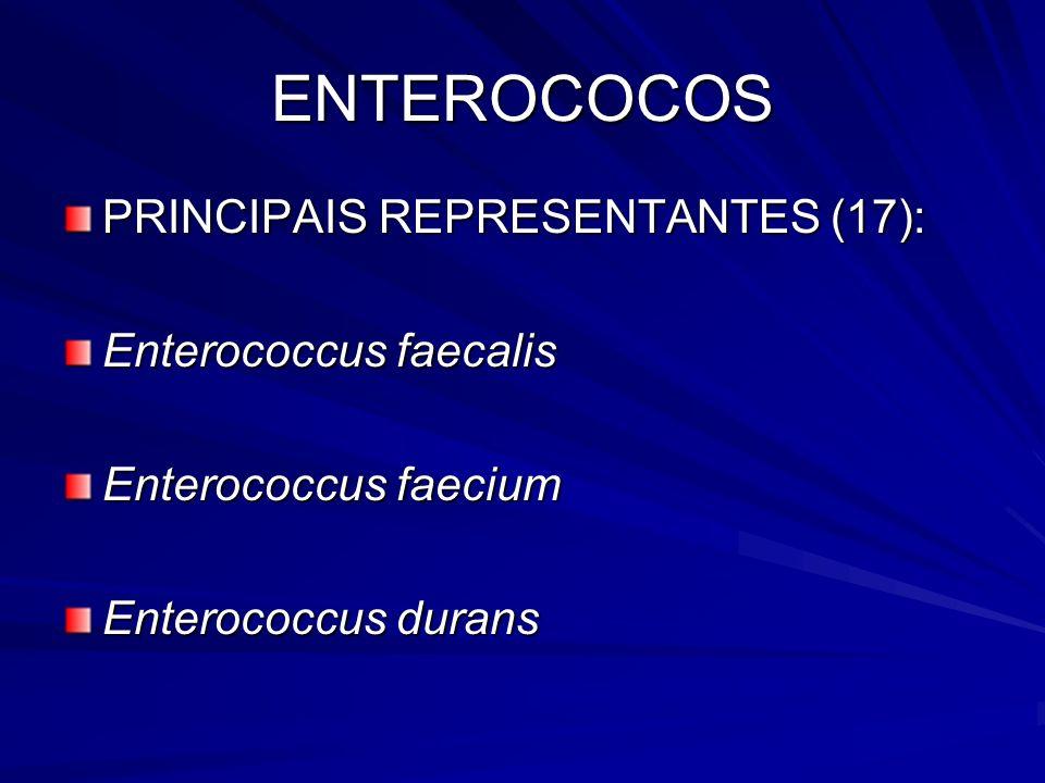 ENTEROCOCOS PRINCIPAIS REPRESENTANTES (17): Enterococcus faecalis Enterococcus faecium Enterococcus durans