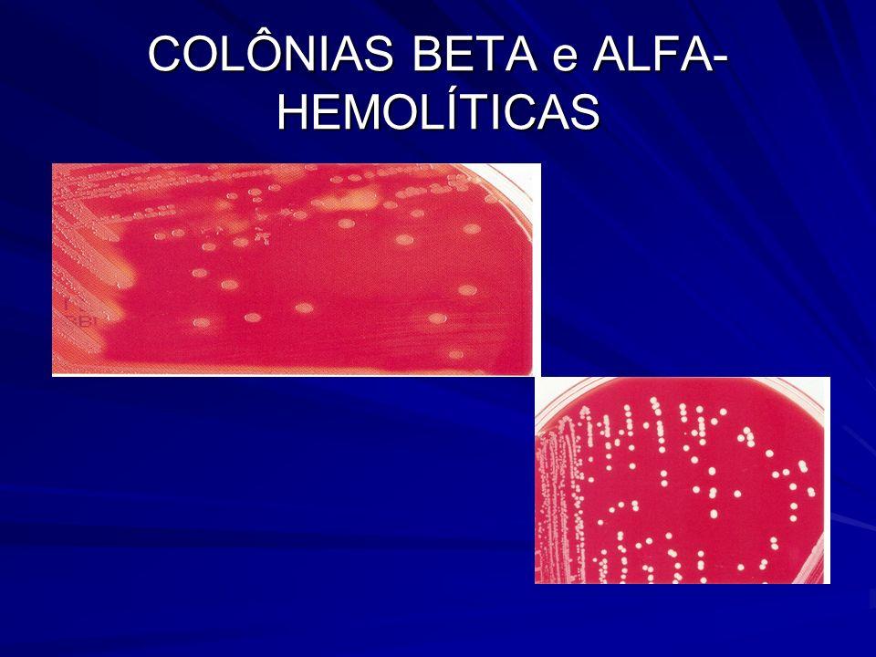 COLÔNIAS BETA e ALFA- HEMOLÍTICAS