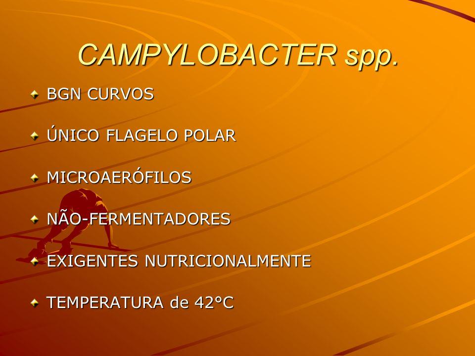 DIAGNÓSTICO de Campylobacter spp.