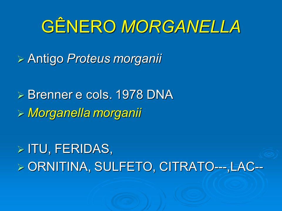 GÊNERO MORGANELLA Antigo Proteus morganii Antigo Proteus morganii Brenner e cols. 1978 DNA Brenner e cols. 1978 DNA Morganella morganii Morganella mor