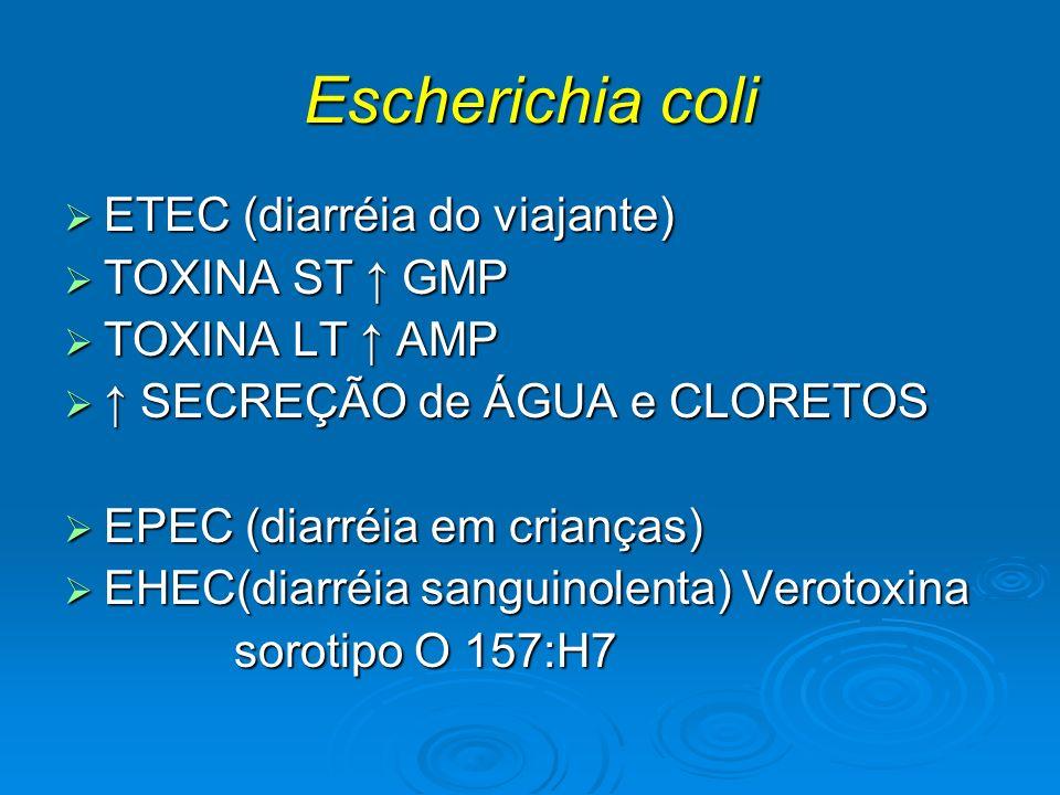 Escherichia coli ETEC (diarréia do viajante) ETEC (diarréia do viajante) TOXINA ST GMP TOXINA ST GMP TOXINA LT AMP TOXINA LT AMP SECREÇÃO de ÁGUA e CL