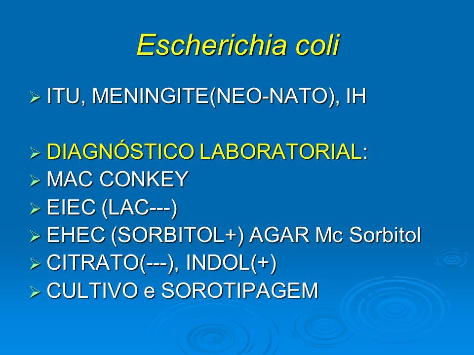Escherichia coli ITU, MENINGITE(NEO-NATO), IH ITU, MENINGITE(NEO-NATO), IH DIAGNÓSTICO LABORATORIAL: DIAGNÓSTICO LABORATORIAL: MAC CONKEY MAC CONKEY E