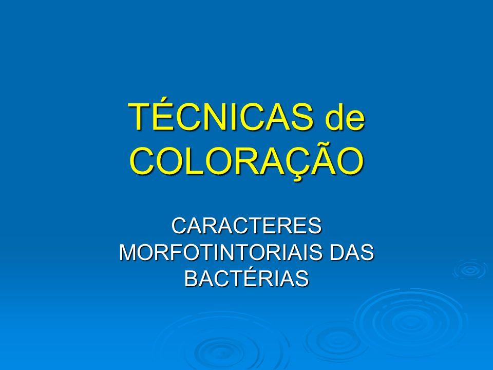 TÉCNICAS de COLORAÇÃO CARACTERES MORFOTINTORIAIS DAS BACTÉRIAS
