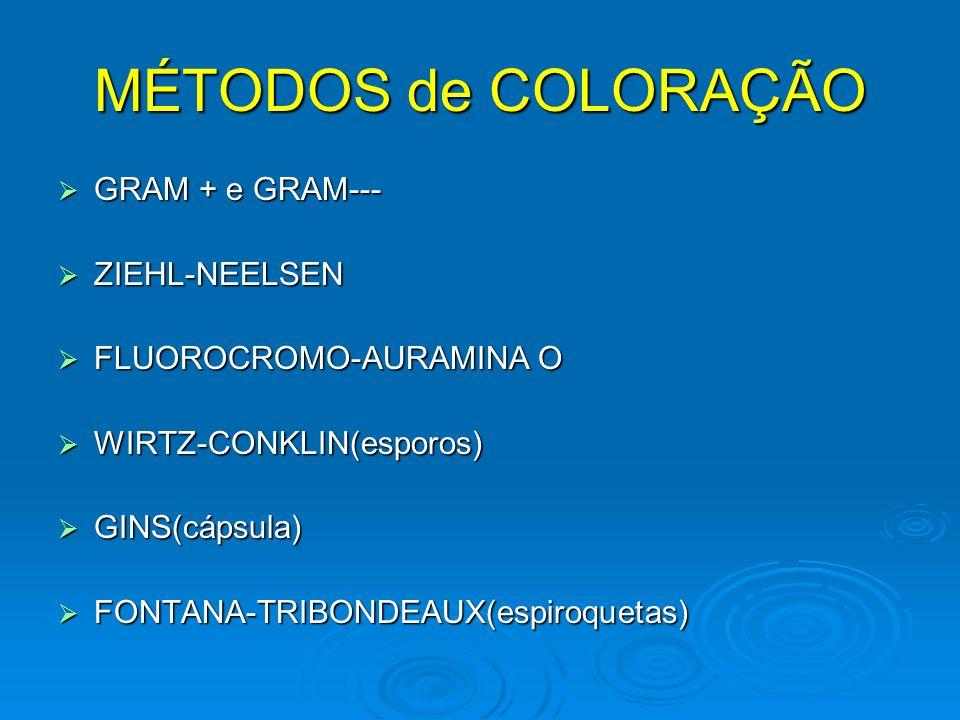 MÉTODOS de COLORAÇÃO GRAM + e GRAM--- GRAM + e GRAM--- ZIEHL-NEELSEN ZIEHL-NEELSEN FLUOROCROMO-AURAMINA O FLUOROCROMO-AURAMINA O WIRTZ-CONKLIN(esporos) WIRTZ-CONKLIN(esporos) GINS(cápsula) GINS(cápsula) FONTANA-TRIBONDEAUX(espiroquetas) FONTANA-TRIBONDEAUX(espiroquetas)