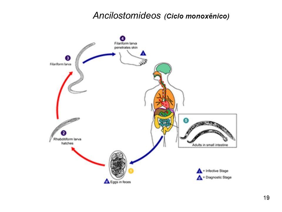 19 Ancilostomideos (Ciclo monoxênico)