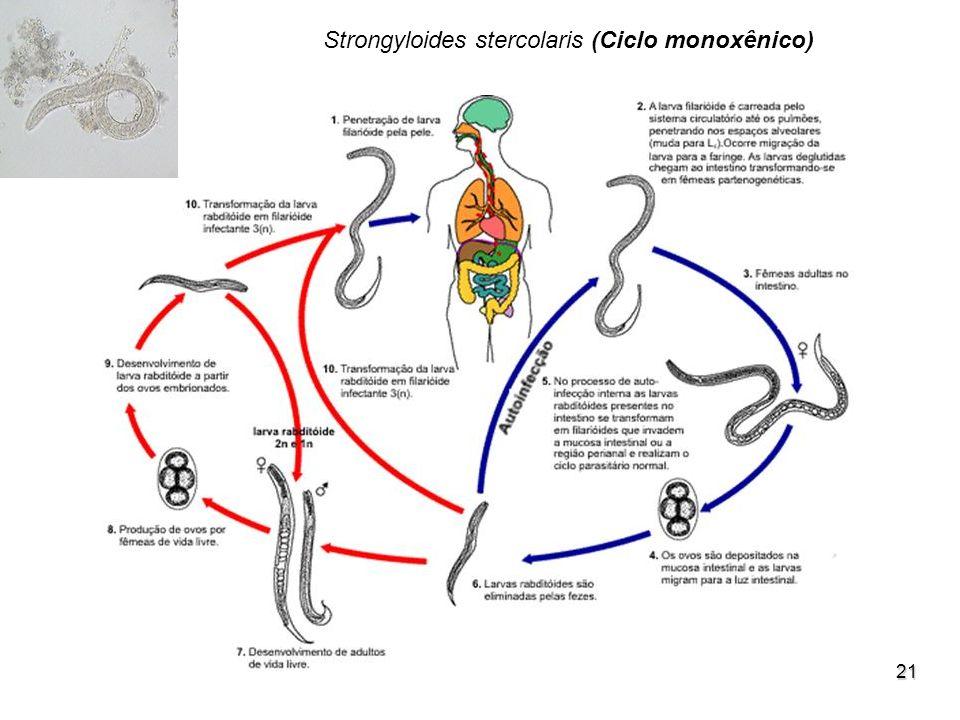 21 Strongyloides stercolaris (Ciclo monoxênico)