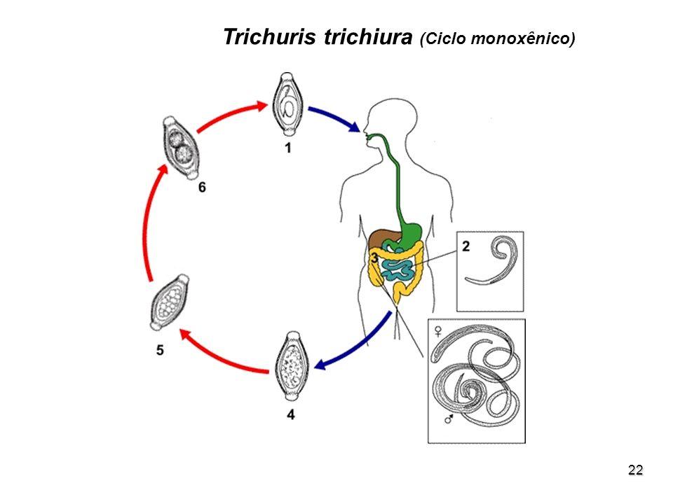 22 Trichuris trichiura (Ciclo monoxênico)