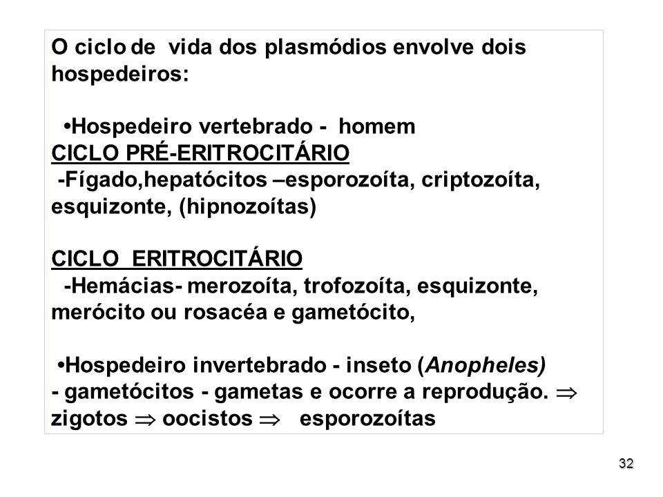 32 O ciclo de vida dos plasmódios envolve dois hospedeiros: Hospedeiro vertebrado - homem CICLO PRÉ-ERITROCITÁRIO -Fígado,hepatócitos –esporozoíta, cr