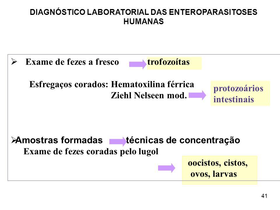 41 protozoários intestinais DIAGNÓSTICO LABORATORIAL DAS ENTEROPARASITOSES HUMANAS Exame de fezes a fresco trofozoítas Esfregaços corados: Hematoxilin