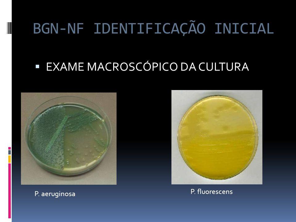 BGN-NF IDENTIFICAÇÃO INICIAL EXAME MACROSCÓPICO DA CULTURA P. aeruginosa P. fluorescens