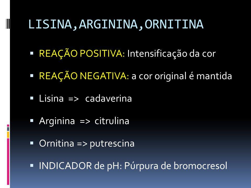 LISINA,ARGININA,ORNITINA REAÇÃO POSITIVA: Intensificação da cor REAÇÃO NEGATIVA: a cor original é mantida Lisina => cadaverina Arginina => citrulina O