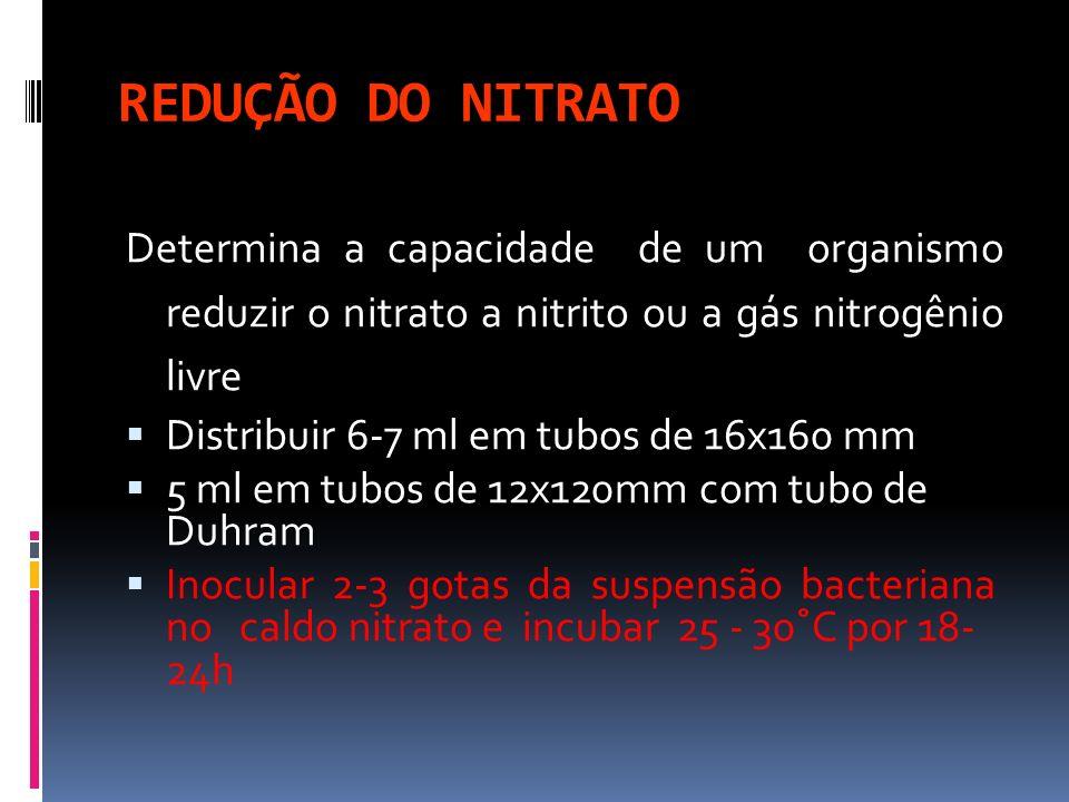 REDUÇÃO DO NITRATO Determina a capacidade de um organismo reduzir o nitrato a nitrito ou a gás nitrogênio livre Distribuir 6-7 ml em tubos de 16x160 m