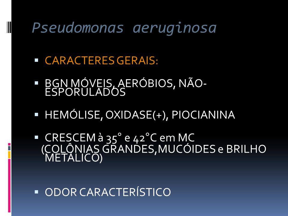 Pseudomonas aeruginosa CARACTERES GERAIS: BGN MÓVEIS, AERÓBIOS, NÃO- ESPORULADOS HEMÓLISE, OXIDASE(+), PIOCIANINA CRESCEM à 35° e 42°C em MC (COLÔNIAS