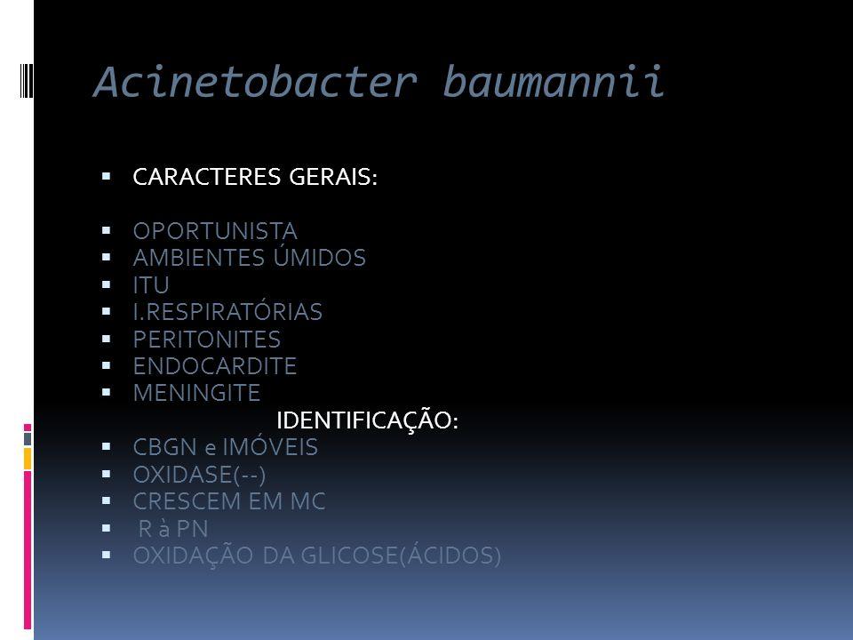 Acinetobacter baumannii CARACTERES GERAIS: OPORTUNISTA AMBIENTES ÚMIDOS ITU I.RESPIRATÓRIAS PERITONITES ENDOCARDITE MENINGITE IDENTIFICAÇÃO: CBGN e IM