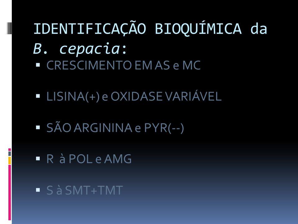 IDENTIFICAÇÃO BIOQUÍMICA da B. cepacia: CRESCIMENTO EM AS e MC LISINA(+) e OXIDASE VARIÁVEL SÃO ARGININA e PYR(--) R à POL e AMG S à SMT+TMT