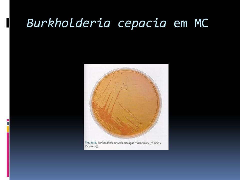 Burkholderia cepacia em MC
