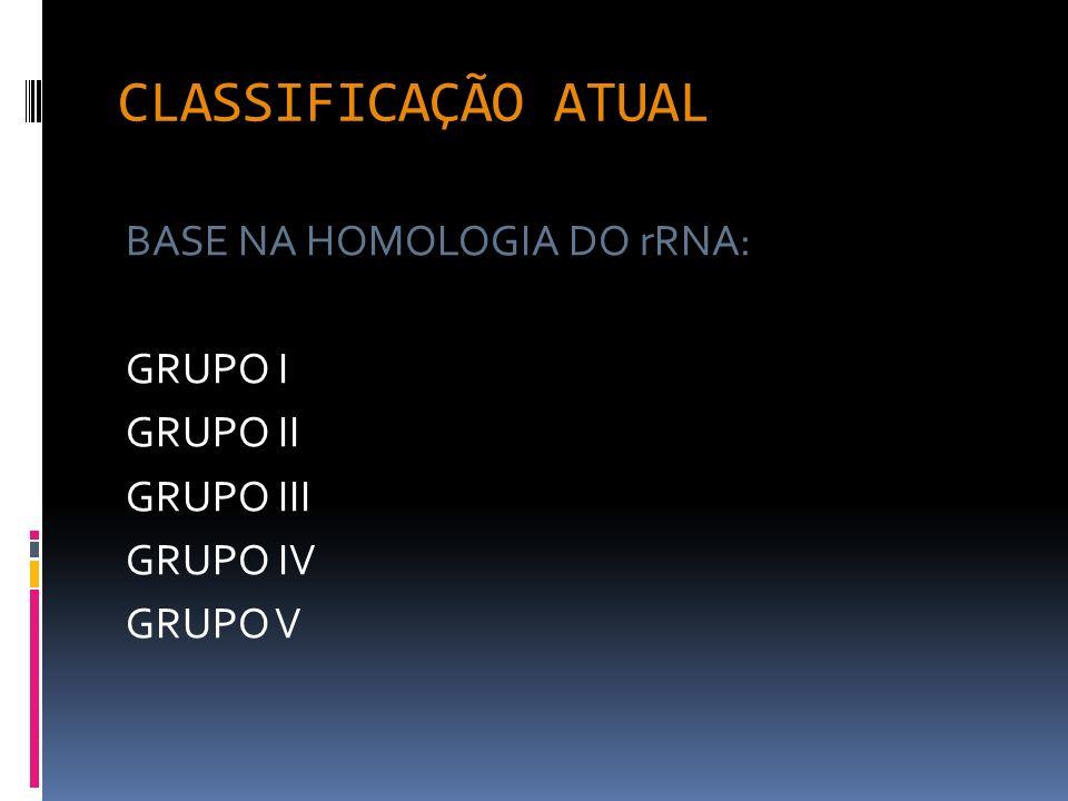 CARACTERES GERAIS: BGN MÓVEIS AS e MC OXIDASE(--) DNASE (+) LISINA(+) OF-MALTOSE(+) OF-GLICOSE e OF-LACTOSE(--) RESISTÊNCIA INTRÍNSECA AMG BETA-LACTÂMICOS IPM FLUOROQUINOLONAS S (SMT+TMT),CLO e CAZ