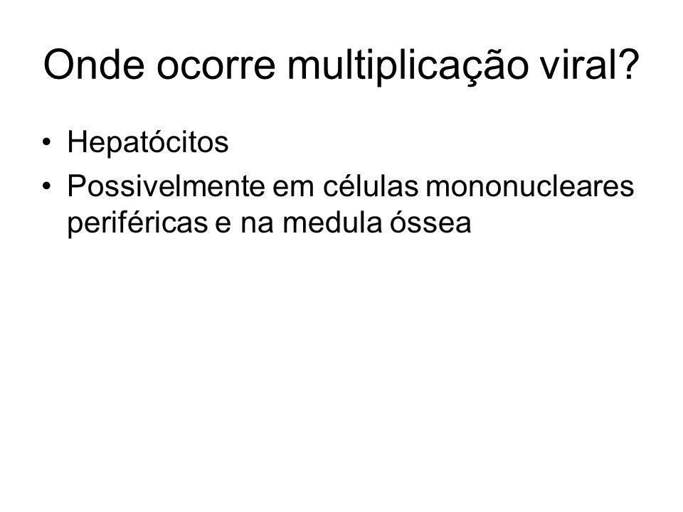 Onde ocorre multiplicação viral? Hepatócitos Possivelmente em células mononucleares periféricas e na medula óssea