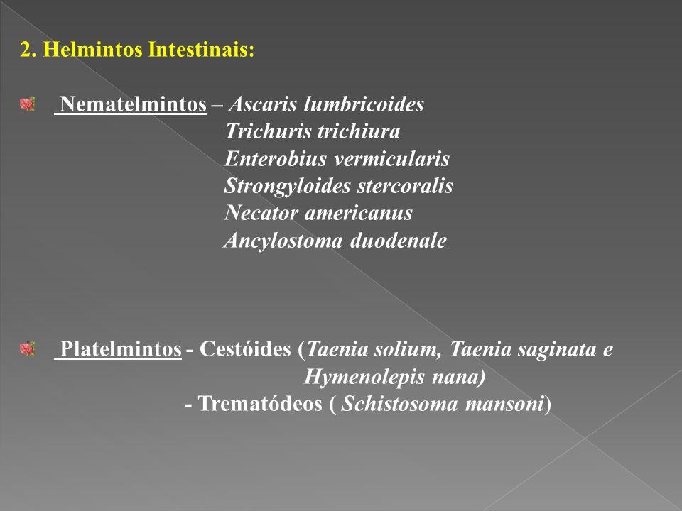 2. Helmintos Intestinais: Nematelmintos – Ascaris lumbricoides Trichuris trichiura Enterobius vermicularis Strongyloides stercoralis Necator americanu