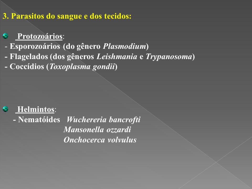 3. Parasitos do sangue e dos tecidos: Protozoários: - Esporozoários (do gênero Plasmodium) - Flagelados (dos gêneros Leishmania e Trypanosoma) - Coccí