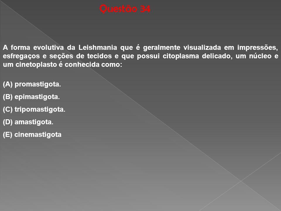Questão 34 A forma evolutiva da Leishmania que é geralmente visualizada em impressões, esfregaços e seções de tecidos e que possui citoplasma delicado
