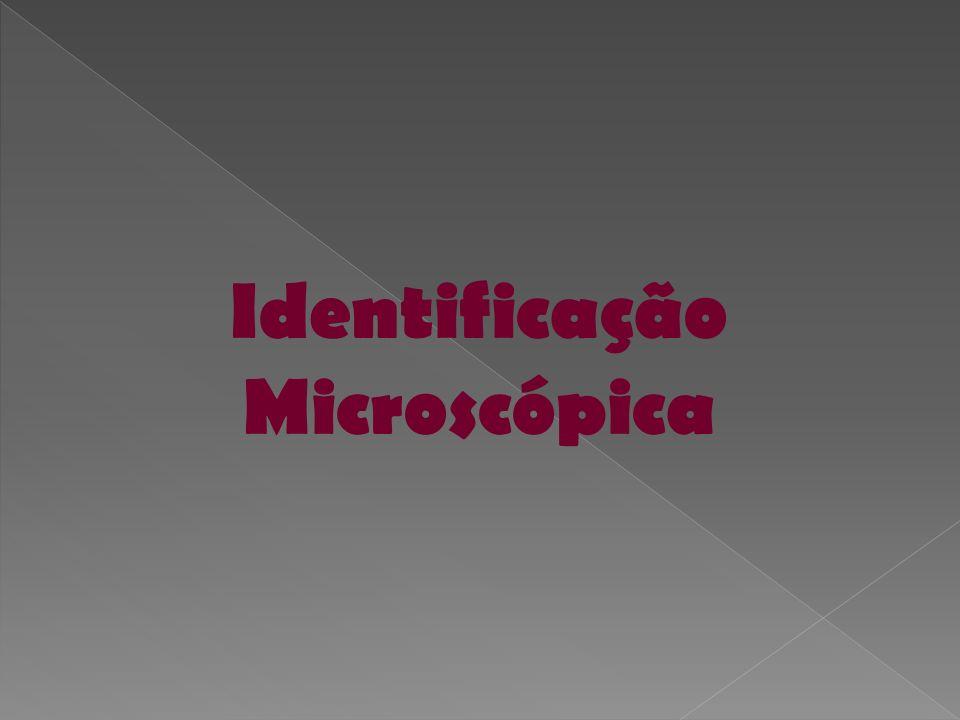 Identificação Microscópica