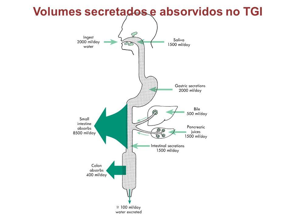 Volumes secretados e absorvidos no TGI