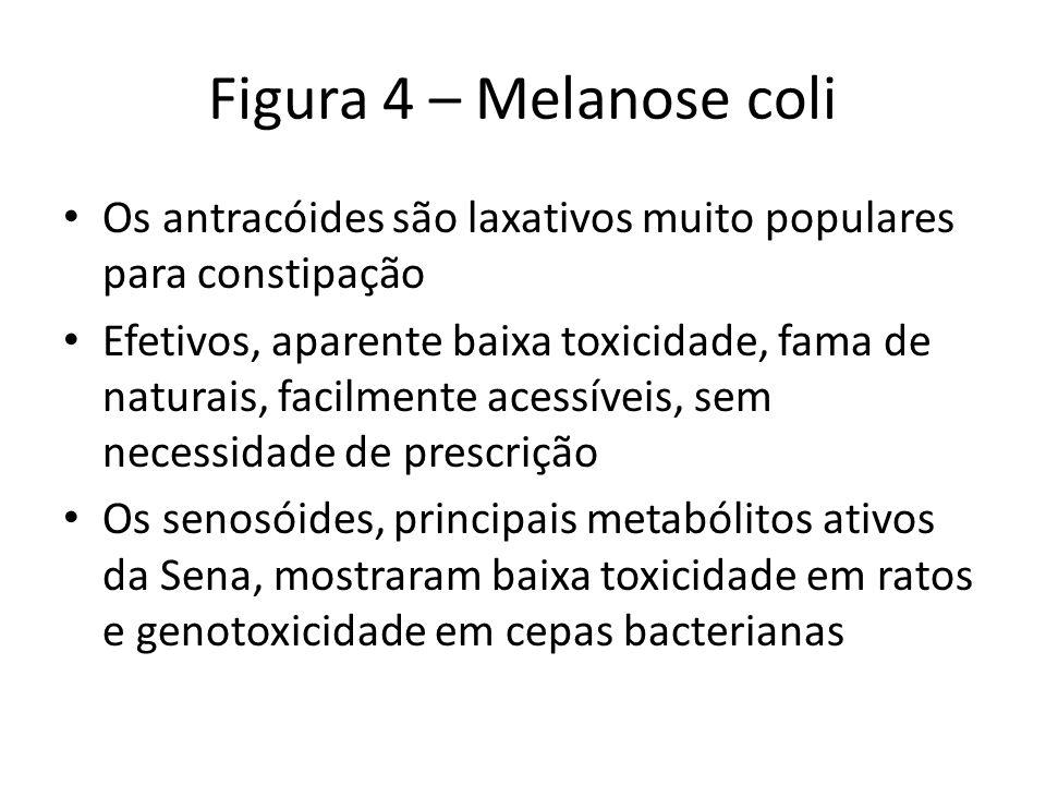 Figura 4 – Melanose coli Os antracóides são laxativos muito populares para constipação Efetivos, aparente baixa toxicidade, fama de naturais, facilmen