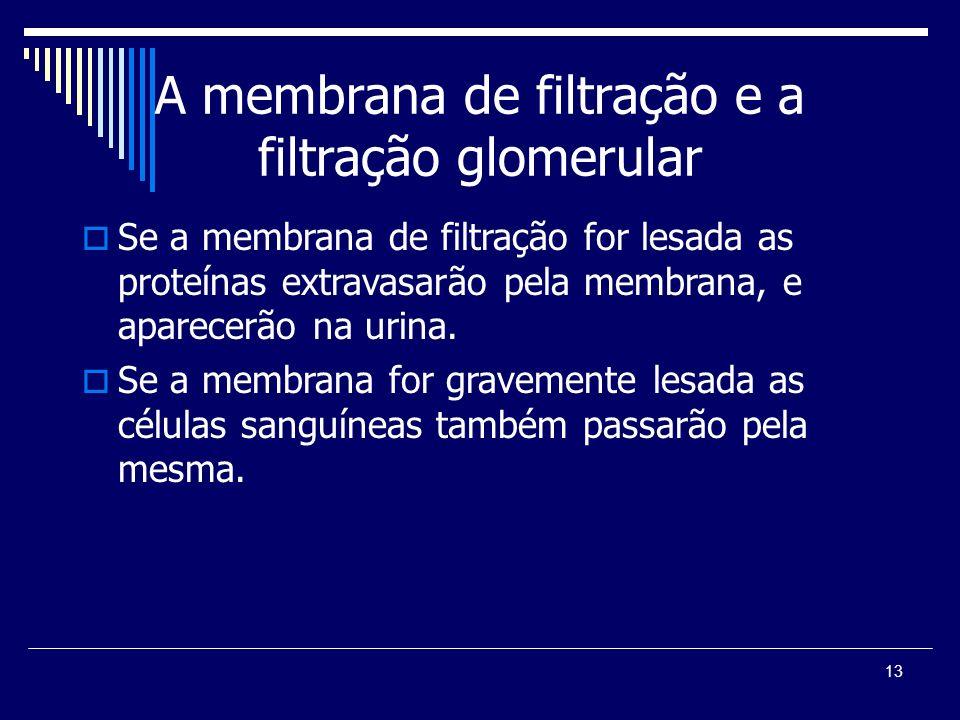 13 A membrana de filtração e a filtração glomerular Se a membrana de filtração for lesada as proteínas extravasarão pela membrana, e aparecerão na uri