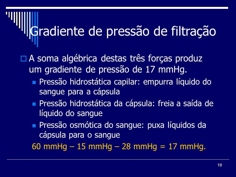 18 Gradiente de pressão de filtração A soma algébrica destas três forças produz um gradiente de pressão de 17 mmHg. Pressão hidrostática capilar: empu