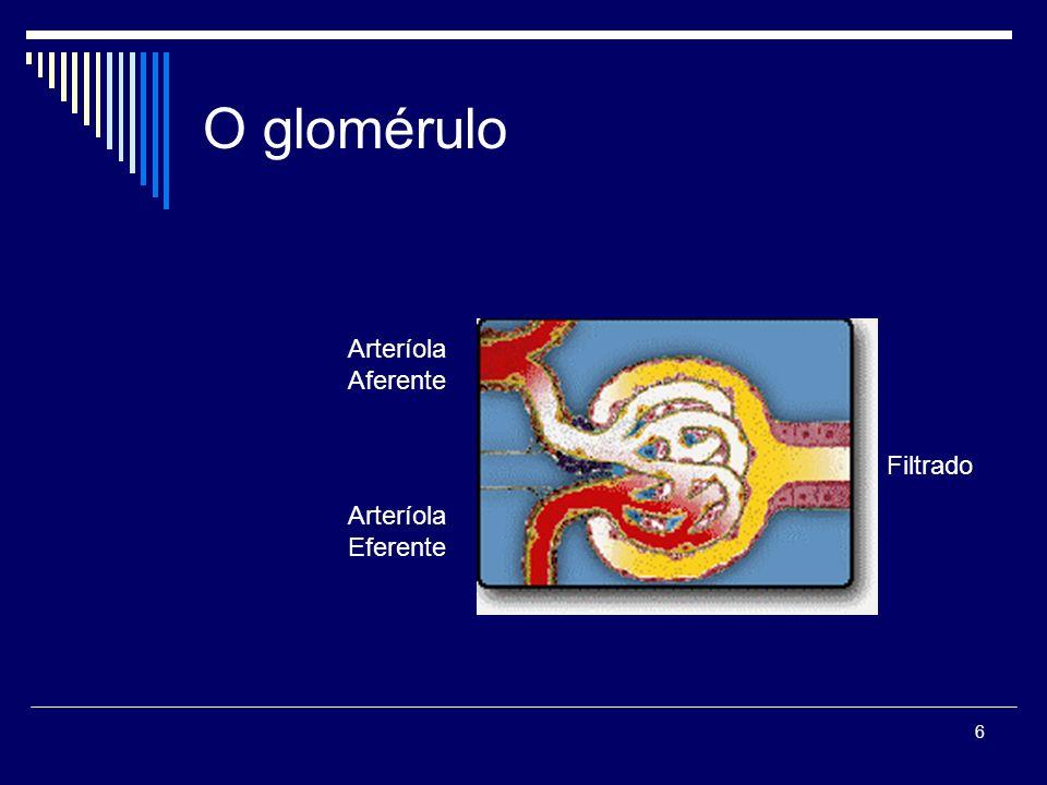 6 O glomérulo Arteríola Aferente Arteríola Eferente Filtrado