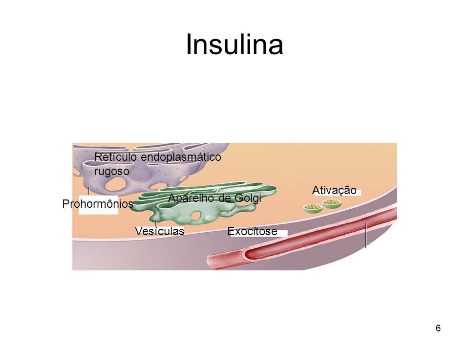 6 Insulina Prohormônios Vesículas Ativação Exocitose Retículo endoplasmático rugoso Aparelho de Golgi