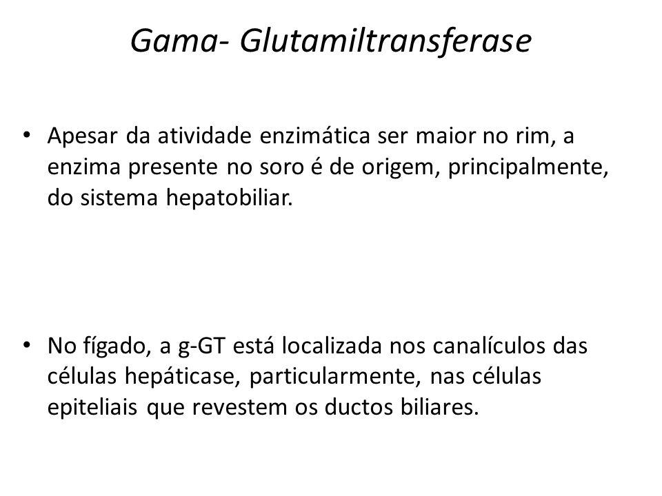 Gama- Glutamiltransferase Apesar da atividade enzimática ser maior no rim, a enzima presente no soro é de origem, principalmente, do sistema hepatobil